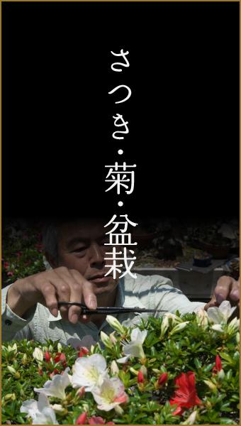 さつき・菊・盆栽